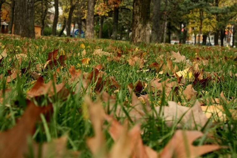 016_Nov-dec 037, 2009