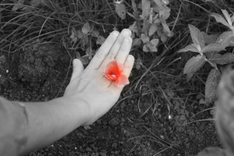 Floarea Iubirii. Gia, 2011